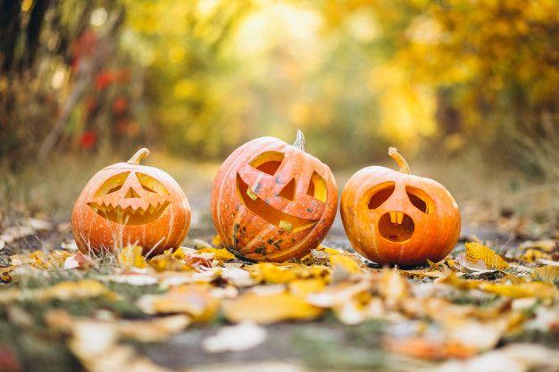 three-cute-halloween-pumpkins-autumn-park_1303-17638.jpg